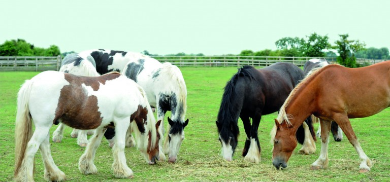 Bransby Horses keeps on keeping on