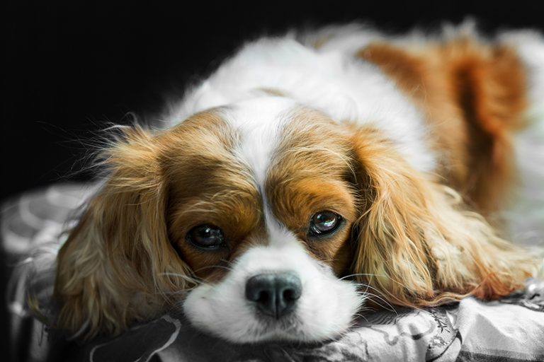 Lockdowns and furry friends: some of the best British dog breeds to consider