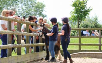 Bransby Horses Autumn Fayre