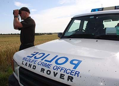 Hare coursing reports fall across the county