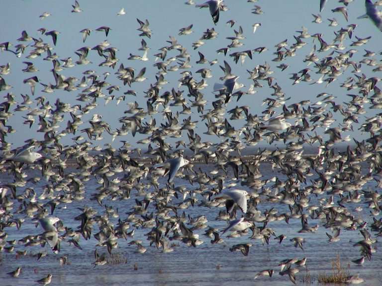 Police operation to protect rare seabirds