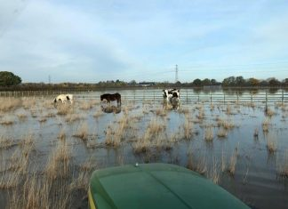 Christmas plea from Bransby Horses as charity cancels festive events due to flooding