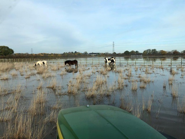 Bransby Horses launch Emergency Flood Crisis Campaign