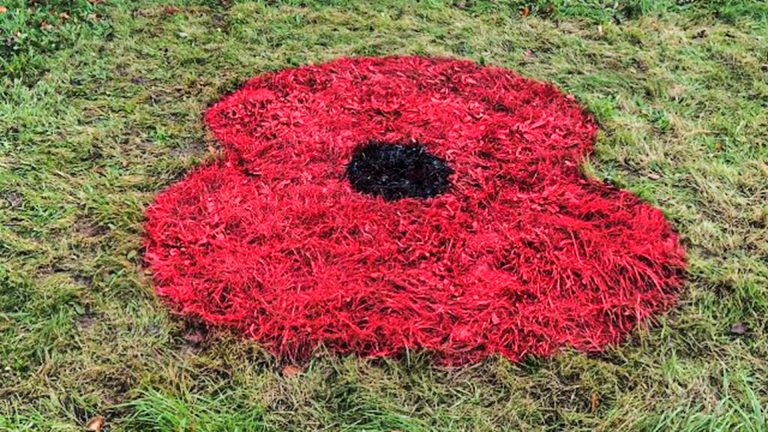 Giant poppies bloom in Lincolnshire ahead of Remembrance Day