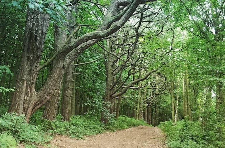 Call for help issued to restore and protect Twigmoor Woods